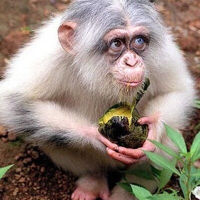 Играть онлайн казино обезьяны – Все лучшие